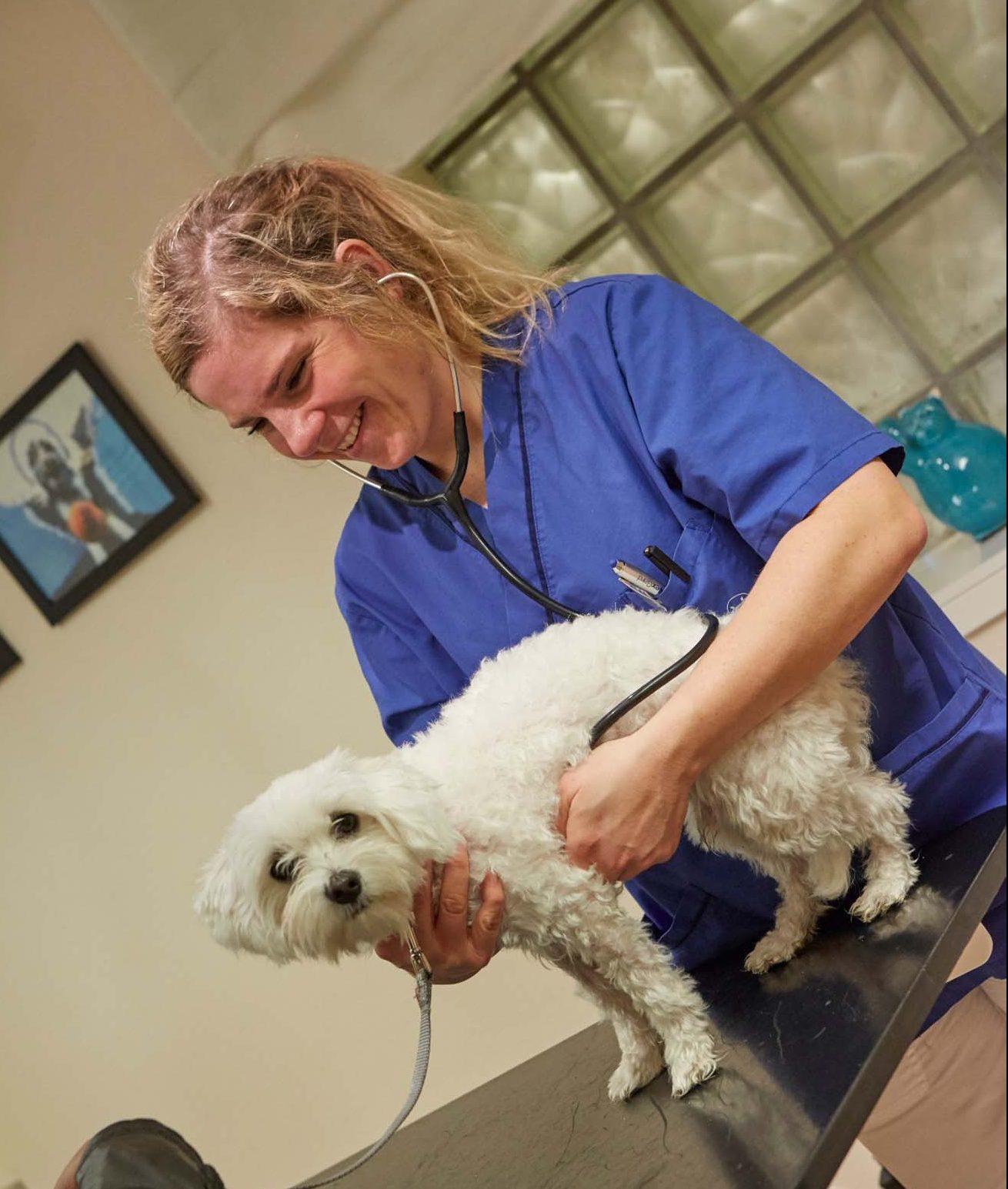 Kvinnlig veterinär i polikliniken